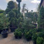 Eden-Szkółka Roślin Ozdobnych